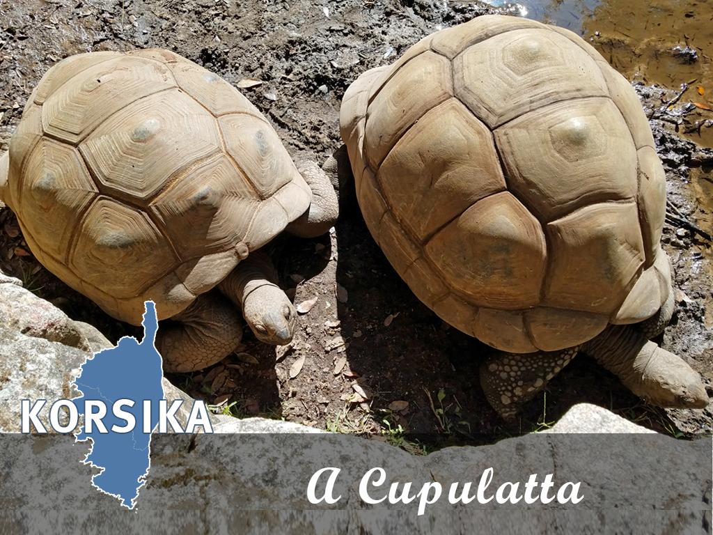 A  Cupulatta – Die Stadt der Schildkröten