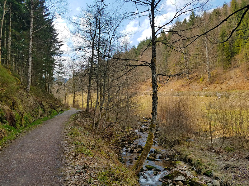 Pfad bei Hinterlangenbach