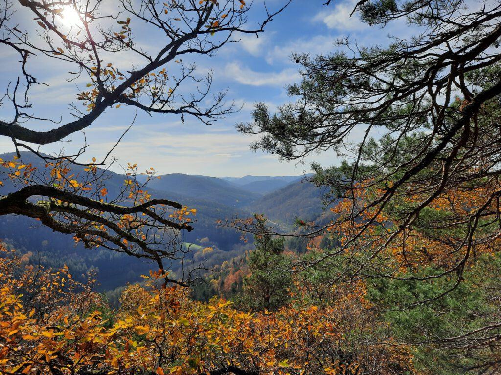 Ausblick auf die Pfälzer Berge vom Rinnthaler Höhenweg