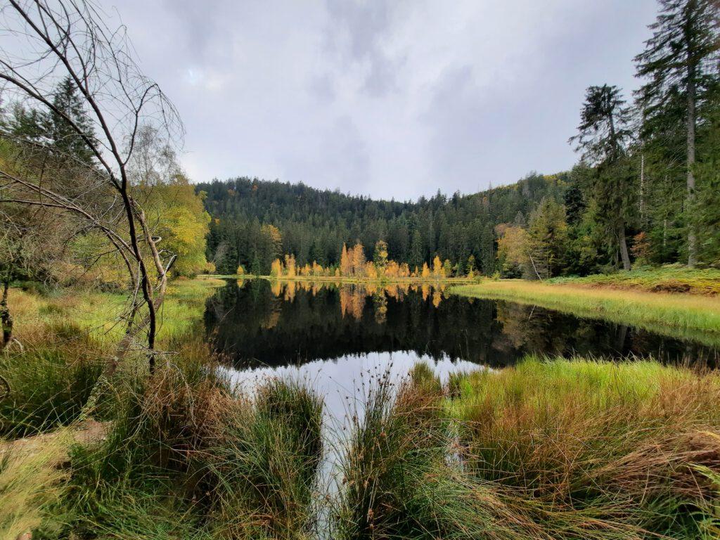 Blick auf den Buhlbachsee