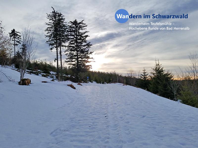 Wandern im Schwarzwald: Wanderheim Teufelsmühle – Hochebene Runde von Bad Herrenalb